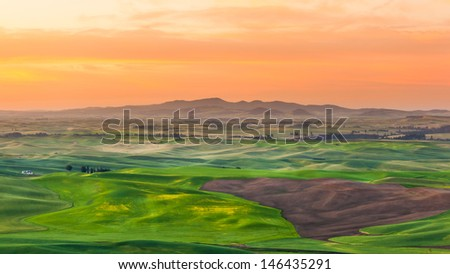 corp field in sunrise, Palouse region, Washington, WA - stock photo