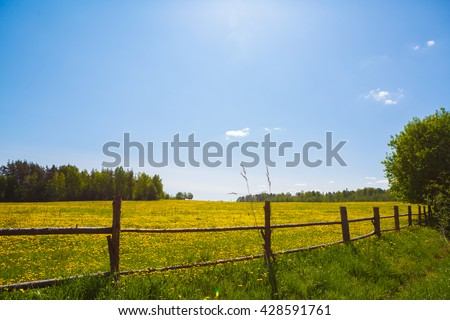 Corral for farm to cattle. Rural view flower meadow and fenced place for walking cows. Pastoral panorama on a paddock. Beautiful landscape of Sunny day. Field yellow dandelions to ruminant  livestock. - stock photo