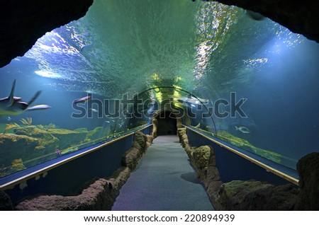 corridor inside an aquarium - stock photo