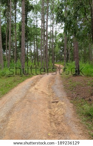 Corridor into the deep woods to explore nature in Thailand.  - stock photo
