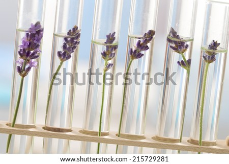 cosmetology lab - Flowers and plants in test tubes - stock photo
