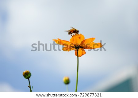 https://thumb7.shutterstock.com/display_pic_with_logo/167494286/729877321/stock-photo-cosmos-and-insect-729877321.jpg