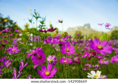 Plant estas flores de invierno para el color magnífico - Charlotte en casa - diciembre de 2016 - Charlotte, NC