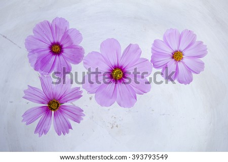 Cosmos flower on water. - stock photo
