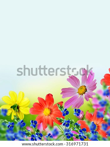 Cosmos flowers and cornflowers on a background of blue sky with clouds - stock photo