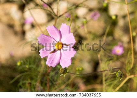 Cosmos flowers and 2 worms