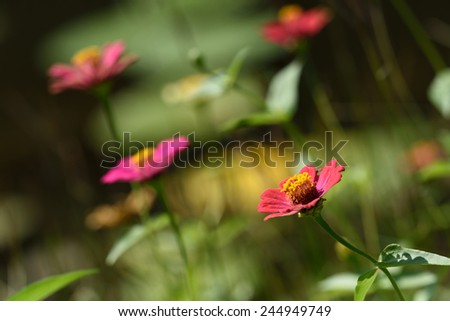 cosmos flowers color background wall wallpaper nature texture pink green pattern