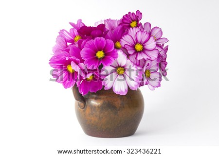 cosmos flowers in a vase on white background - stock photo