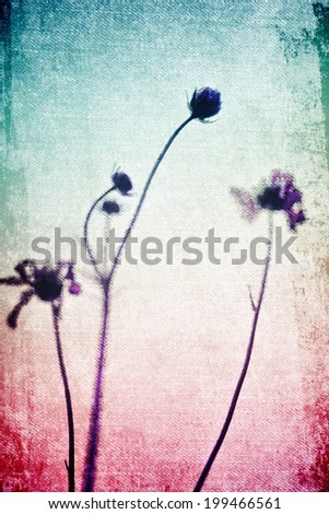 Cosmos flowers in Vintage and pastel style for canvas background - stock photo