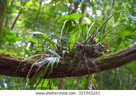 Costa rica exotic flora - stock photo
