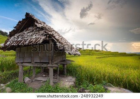 Cottage at a cornfield.