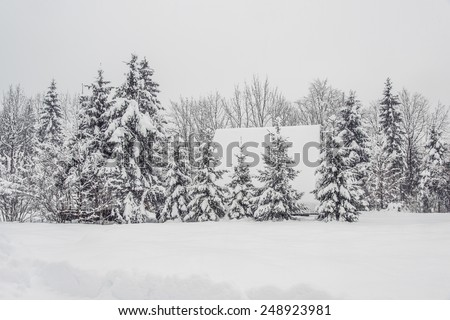 Cottage caught in the pine forest. Winter Fairytale at Bohinj Lake in Slovenia. Mystical landscape on a winter day with heavy snow. Cottages reflection in the Snow.