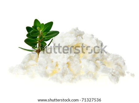 Cottage cheese (curd) heap with thyme twig, isolated on white - stock photo
