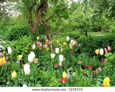 Cottage Garden - stock photo