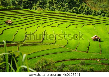 cottage of farmer in rice terraces