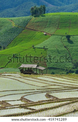 Cottage on step rice's field at mountains in Chiangmai province,Thailand