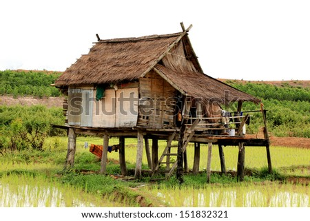 Cottage, Paddy field, Rice  - stock photo