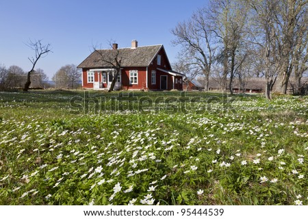 Cottage with wood anemones in the garden