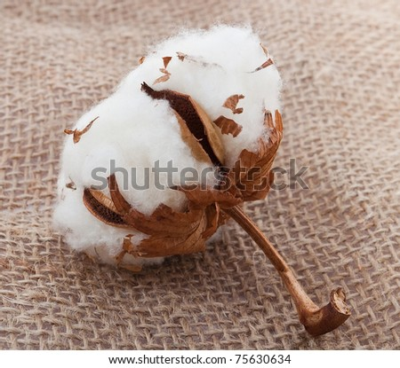 Cotton ball on sacking material - stock photo