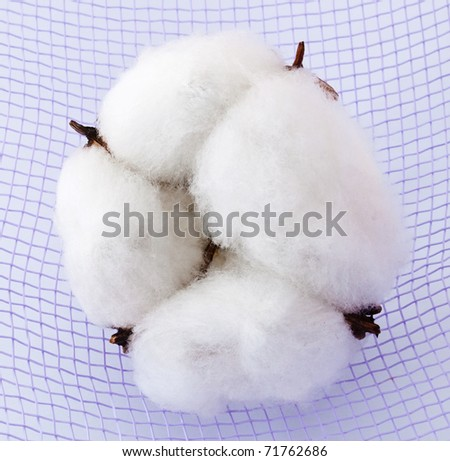 Cotton boll on the background - stock photo