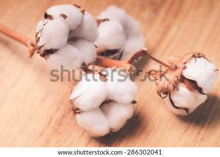 Cotton flower close up on wooden table - stock photo