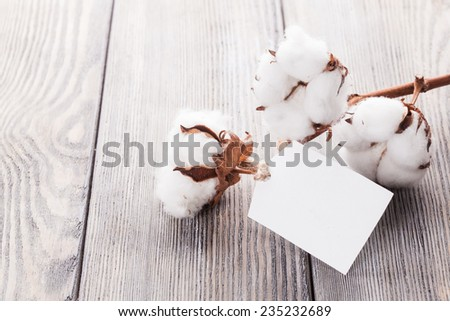 Cotton flower close up with tag - natural organic textile - stock photo