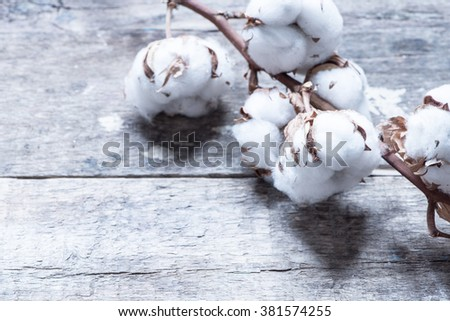 Cotton flowers close up/toned photo - stock photo