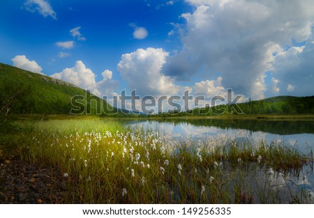Cotton grass in the mountain valley, Hemsedal - Norway - stock photo