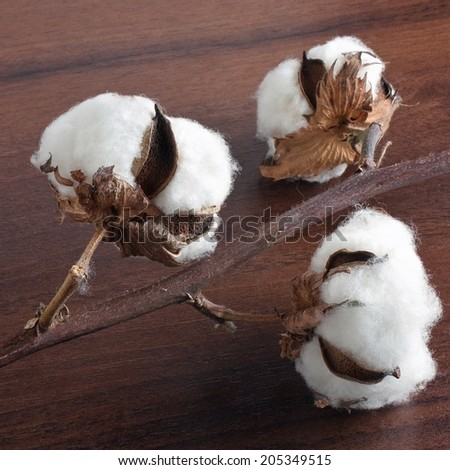 Cotton on the wooden background - stock photo