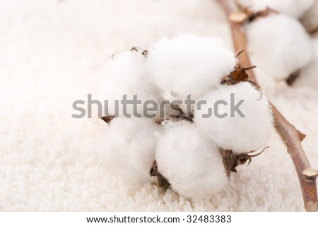 Cotton plant on a fluffy towel - stock photo