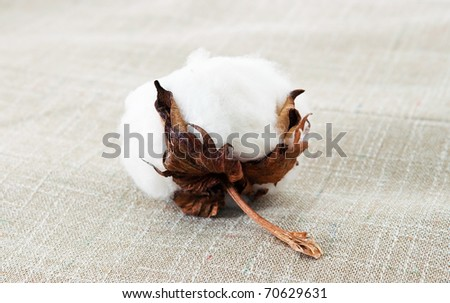 Cotton plant on the texture - stock photo