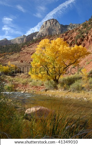 Cottonwood Tree Along River in Western Utah - stock photo