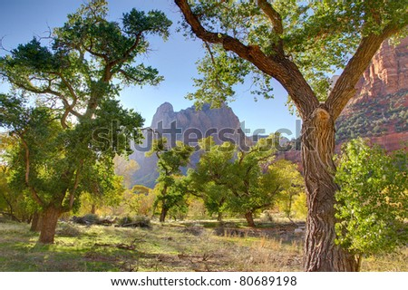 Cottonwood trees in the valley below Court of the Patriarchs, Zion National Park - stock photo