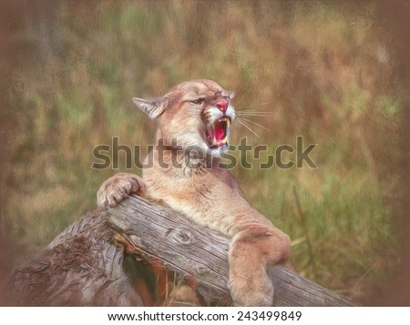 Cougar growling, painted against textured background - stock photo