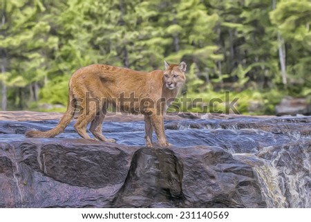 Cougar in Minnesota river - stock photo