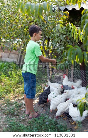 Country boy feeding chickens, at countryside
