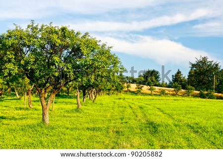 Country green landscape - stock photo