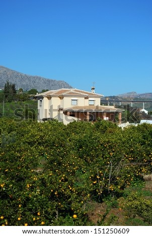 Country house with orange trees in the foreground, near Alora, Mijas Costa, Malaga Province, Andalucia, Spain, Western Europe. - stock photo