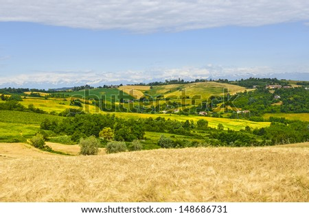Country landscape of Monferrato (Asti, Piedmont, Italy) at summer, with vineyards and the Alps in background