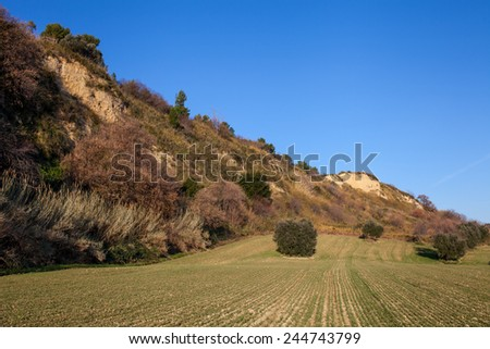 Country landscapes with oak trees and blue sky background - stock photo