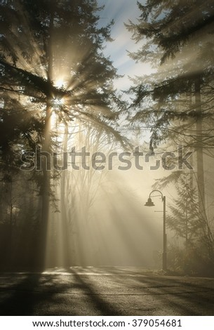 Country Lane. A country lane on a foggy morning. - stock photo