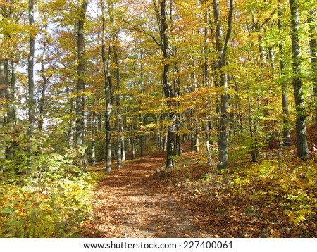 Country lane in a deciduous forest in autumn - stock photo