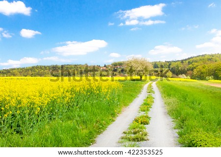 Country lane to a rape field