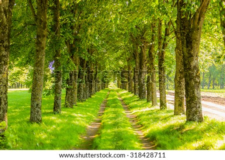 Country path running through tree alley - stock photo