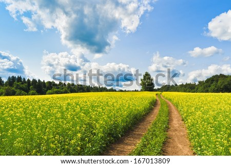 Country road across rape field - stock photo