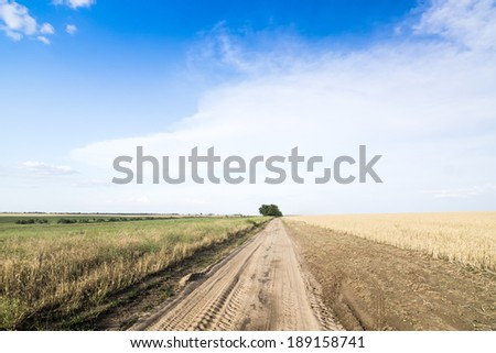 Country road among fields of wheat. Summer, Sunny day. - stock photo