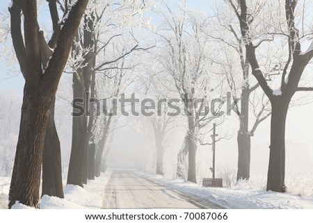 Country road among frosted maple trees on a foggy winter morning. - stock photo