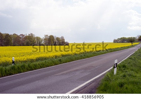 Country Road and rapeseed field / Country Road - stock photo