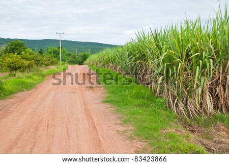 Country road and sugarcane plant,countryside,Thailand - stock photo
