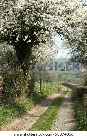 Country Road Arched by a Cherry Tree in Blossom - stock photo